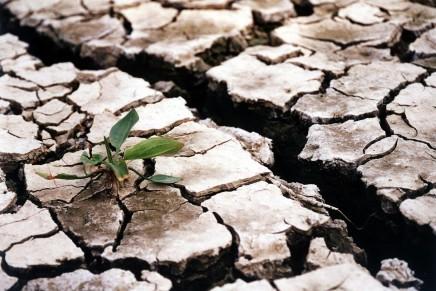 Statul va compensa pagubele cauzate de seceta printr-o schema de ajutor
